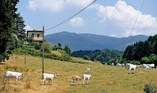 fattoria-marena